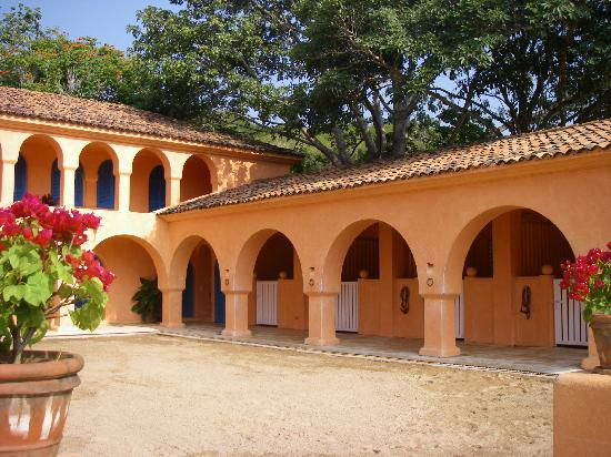 mexico stables