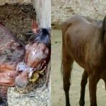 Horse rescue in Cairo, Egypt