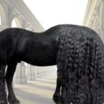 Tangled manes and mythology