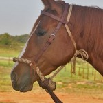How NOT to sell horse tack